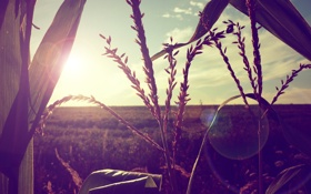 Картинка поле, цвета, солнце, лучи, свет, природа, фото