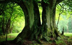 Обои зелень, лето, деревья, стволы