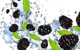 Обои брызги, ежевика, blackberry, вода, белый фон, ягоды