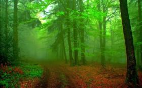 Обои лес, деревья, растительность, тропинка