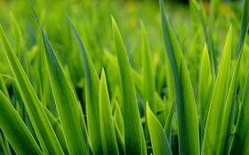 Картинка зелень, капля, Природа, красиво, свежо