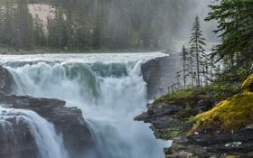 Картинка деревья, водопад, Природа