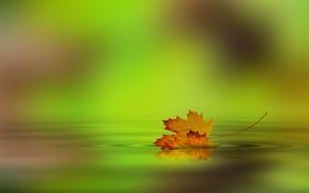 Картинка осень, вода, лист