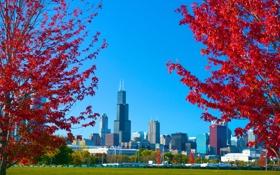 Картинка осень, небо, трава, деревья, город, парк, Чикаго