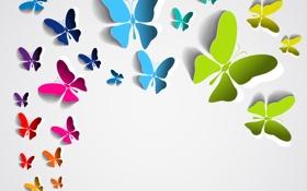 Обои бабочки, фон, цветные
