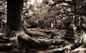 Обои парк, дерево, старое, огромное
