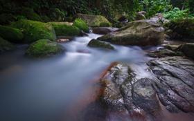 Обои ручей, камни, река, деревья