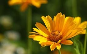 Картинка макро, цветы, природа, фото, фон, обои, растение