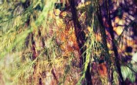 Обои листья, ветки, природа, дерево, фотографии, фоновые обои для рабочего стола