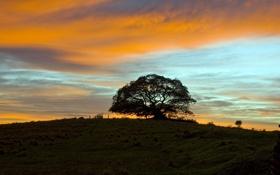Картинка лето, закат, дерево, photos