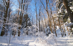 Картинка зима, лес, снег, небо, деревья