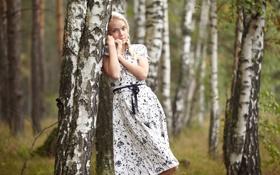 Картинка лес, девушка, березы