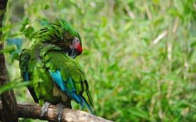 Картинка лес, природа, птица, ветка, попугай