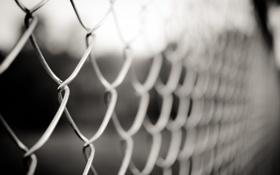 Обои фото, сетка, обои, забор, ограждение, картинка, разное