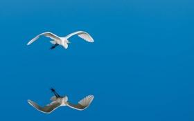 Обои птица, полёт, отрожение