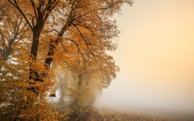 Картинка Autumn, morning, foggy