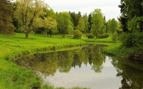 Обои лето, озеро, парк
