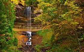 Картинка осень, лес, листья, деревья, водопад