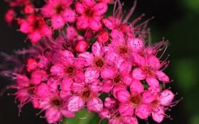 Картинка лепестки, цветы, усики, макро, ярко