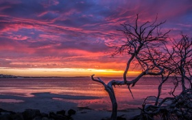 Обои Beach, Sunset, pink, Coffin Bay, orange