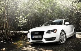 Обои дорога, белый, свет, Audi, заросли, ауди, купе