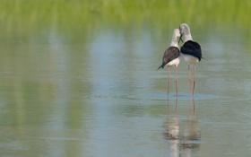 Картинка природа, река, птицы