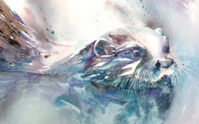 Обои мордочка, акварель, Выдра, Otter
