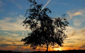 Картинка небо, солнце, облака, пейзаж, закат, природа, дерево