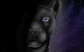 Картинка усы, взгляд, звезды, животное, хищник, пантера, арт