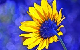 Обои цветок, подсолнух, лепестки, стебель