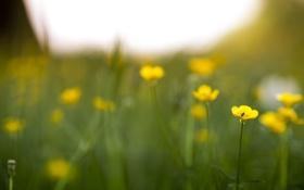 Картинка весна, трава, лето, желтые, поле, зелень, мошка