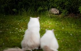 Обои трава, кошки, цветы, кусты, любопытство, визит
