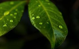 Картинка листья, вода, капли, макро, drops of nature