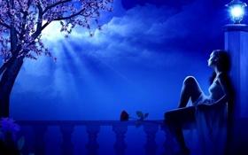 Обои цветок, девушка, облака, ночь, дерево, луна, фонарь