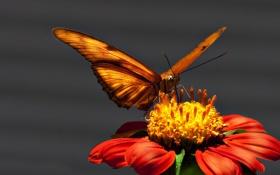 Обои цветок, яркость, бабочька