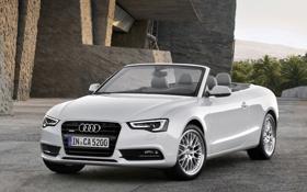 Картинка Audi, Авто, Белый, Машина, Кабриолет, Капот, День