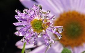 Картинка цветок, капли, макро, нежно
