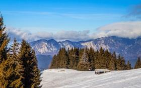 Обои облака, снег, деревья, горы, ели