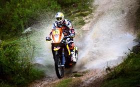 Обои Спорт, Мотоцикл, Гонщик, Мото, Брызги, Red Bull, Rally