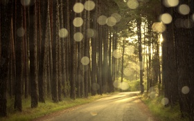 Обои дорога, лес, свет, блики, вечер, сосны