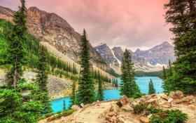 Обои деревья, горы, ели, Канада, Banff National Park, Canada, Moraine Lake