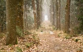 Картинка природа, лес, снег, деревья