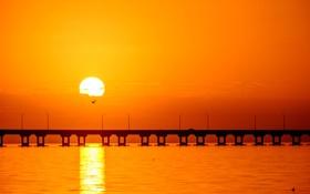 Обои закат, лагуны, мост, солнечный, птицы