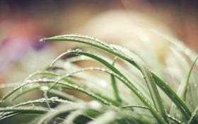 Картинка трава, вода, капли, макро, природа, роса, зеленая
