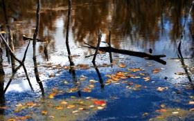 Обои листья, деревья, осень, озеро