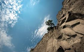 Картинка небо, природа, скала, дерево