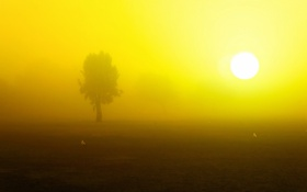 Обои утро, пейзаж, поле, птицы, туман