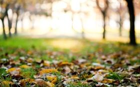 Картинка трава, растение, treesm leavesm размытие, autumn, деревья, macro, фон