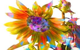 Обои цветок, линии, краски, подсолнух, лепестки