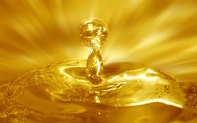 Обои капли, мед, сладости, мёд, drops, sweets, Honey